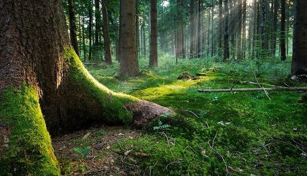 Regaliamoci un bosco